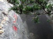 世界上最漂亮的六棵树,日本新西兰均有上榜,中国的最