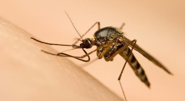 蚊子咬的疤痕怎么消?蚊虫叮咬后快速止痒的四个方法!