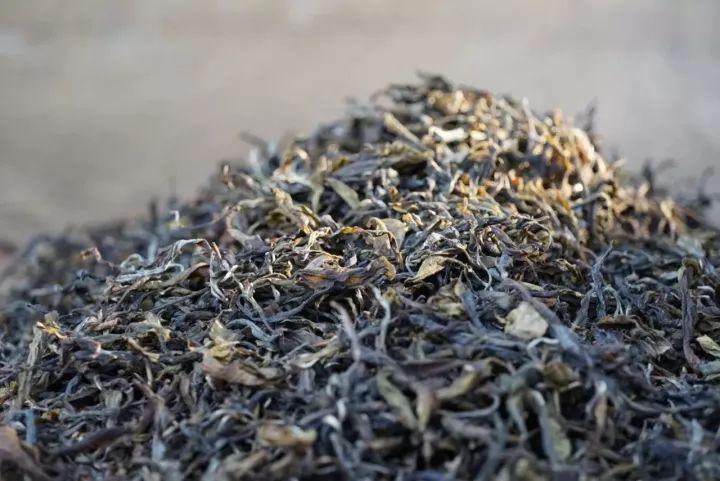 普洱的生茶和熟茶_多聊茶|普洱,喝生茶还是熟茶?