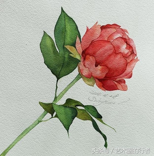 适合初学者临摹的水彩花卉分享图片