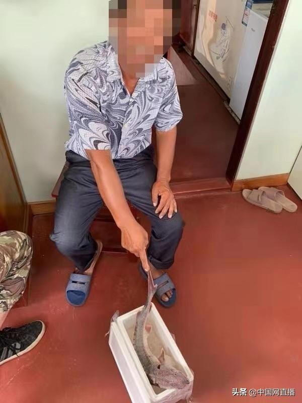 上海一渔民捕获中华鲟放进冰箱被刑拘 中华鲟已死亡