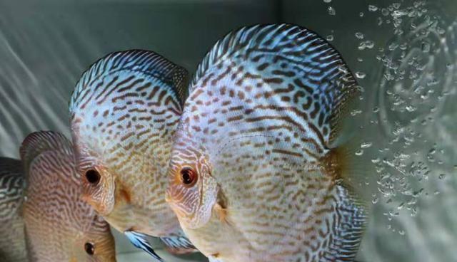 饲养观赏鱼没事就把下列东西往鱼缸里扔,事实上有害无益