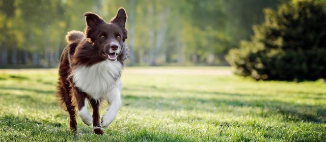 狗狗为啥看着可怜巴巴?因为它可能在伤心,这3个就是伤心的表现