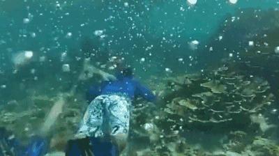 世界首个人造鱼鳃呼吸器,带着它下水,就能像鱼