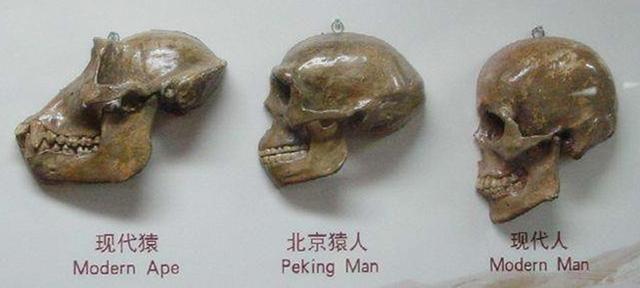 中国文化究竟来源何方?中国人祖先究竟来自哪