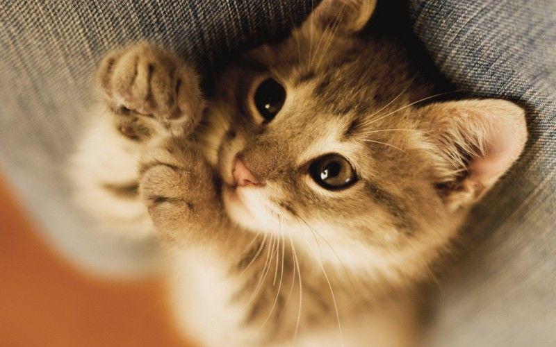 抖音上玩猫的女孩子最后玩死了猫
