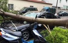 台风肆虐过后,你的爱车遭殃了吗?