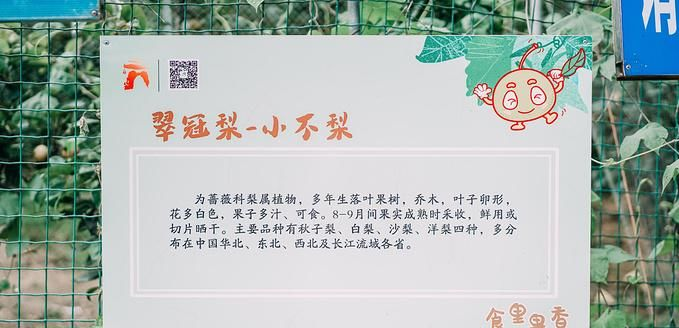 【南京周边游】七月盛夏,去溧水采摘水果吧