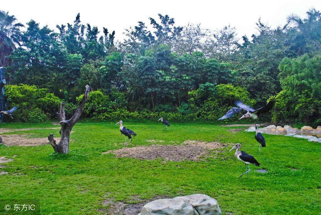 广州动物园,良心动物园,门票只需20元