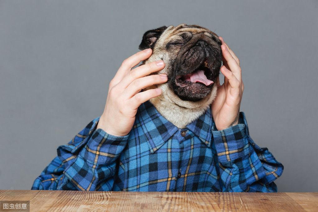狗狗哭成泪人,其实并不一定是伤心,可能是告诉你它的眼睛不舒服