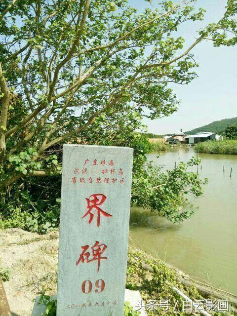 """重游广东淇澳岛红树林,中国历史上少见的""""白石街"""""""