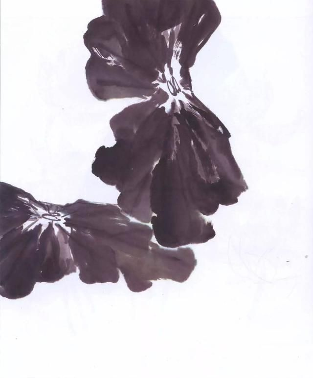 花朵素描的步骤加图片