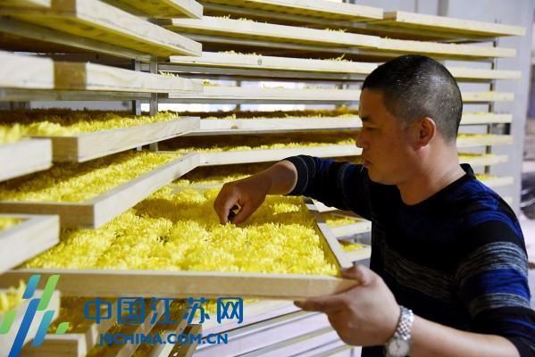 如东县大豫镇十亩皇菊开启视频致富门全村蓝球回放图片