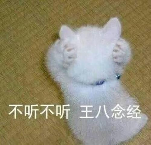 小奶猫表情超奶思!熊猫头回来了:真可爱,得找的心动了表情包图片