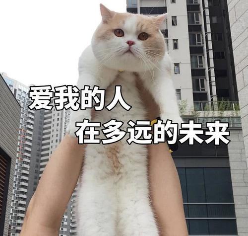 傲娇不好表情:生气了,哄老婆的那种可表情爱多给猫咪包图片