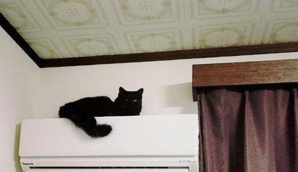 """猫不愿待空调屋,结果出去不到1分钟又挠门""""我要变成烤全猫了"""""""