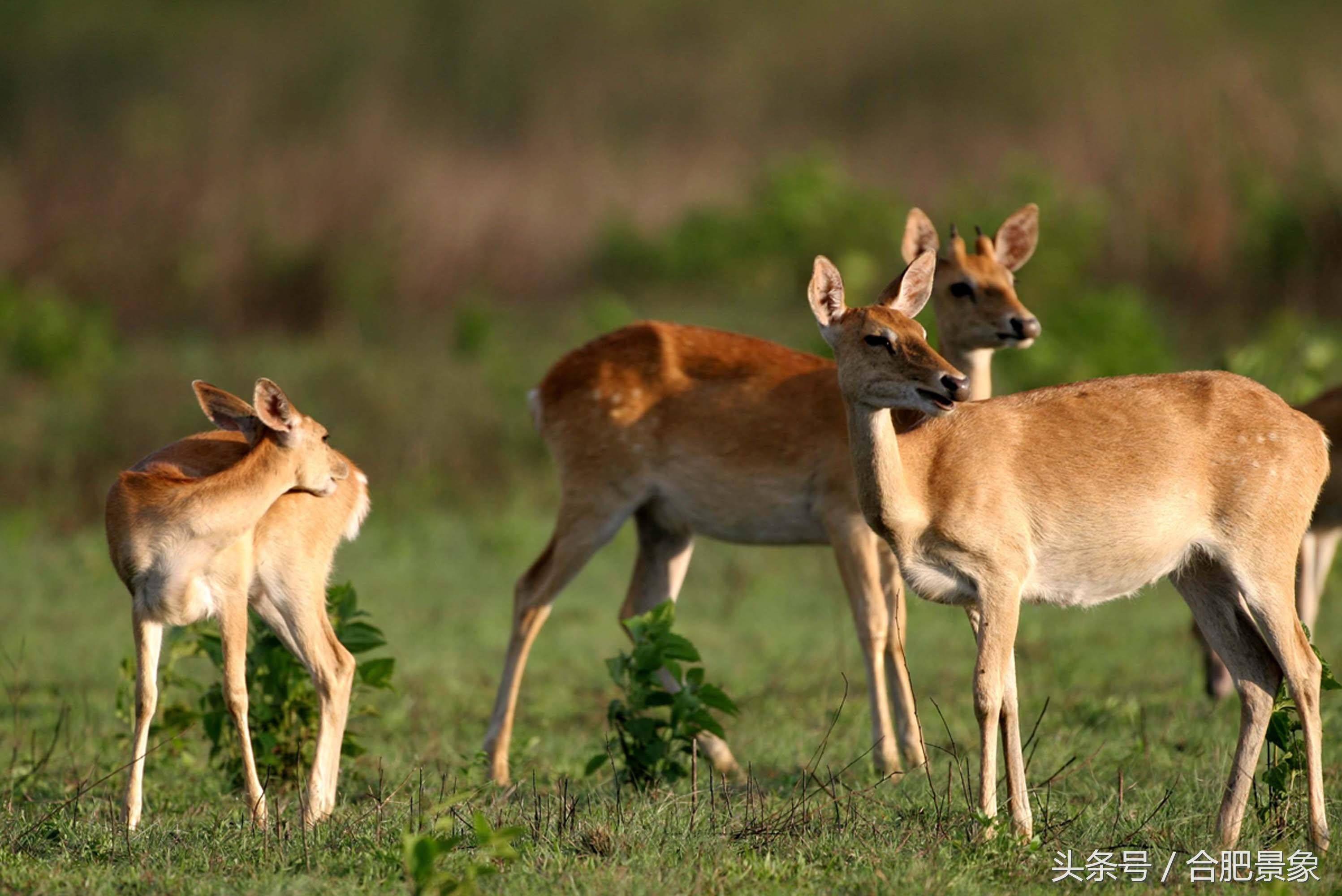 盘点世界十大最珍稀野生动物,知晓地球上濒临灭绝的十种动物!