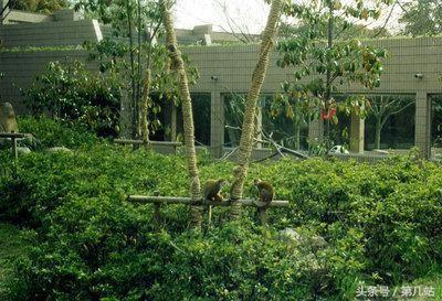 中国十大人气动物园,打算三年时间带孩子看完,你会选择哪一家?
