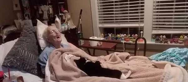 猫咪在屋里到处收集玩具拿给病危的奶奶,看完泪奔