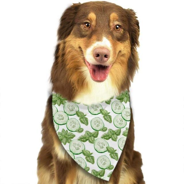 狗狗可以吃黄瓜吗?黄瓜低卡又营养,切成丁狗狗也爱吃