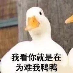 网红鸭表情猝不及防地火了,快来收割1一波~表情包图片大全v表情图片