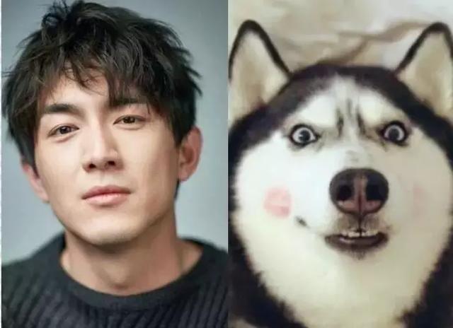 明星与动物的搞笑撞脸,王俊凯软萌,李易峰简直了