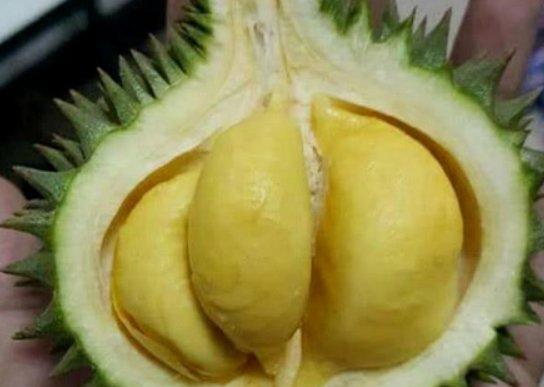 迷你水果火爆网络,香蕉太过秀珍,不够塞牙缝,榴莲像极了刺猬