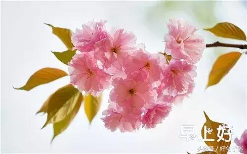 微信早上好的鲜花图片问候语 朋友圈早晨动态鲜花祝福