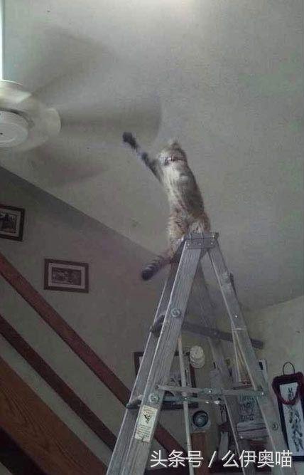 猫咪用生命诠释什么叫闲着没事找事干