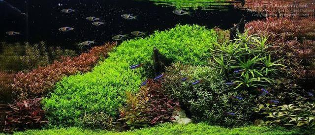 经验之谈,浅谈草缸开缸、养鱼养草注意事项