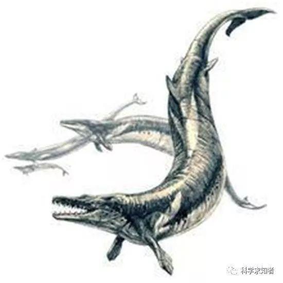 龙王鲸的身体结构中最著名的可能是0.