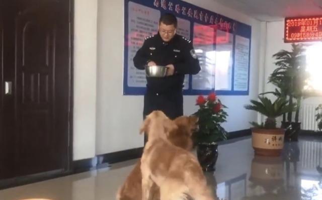狗狗迷路向警察撒娇报警,主人赶到派出所发现在座都是同事!