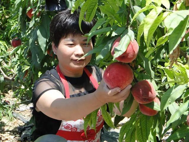 北岭镇首届瓜果采摘文化节成功举办!