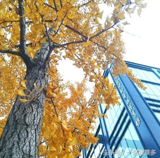 秋天风景别有一番美