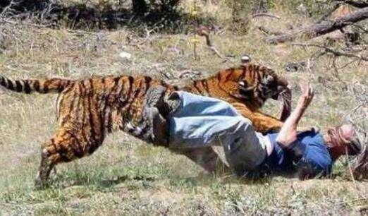 推荐 正文  宁波动物园咬死死老虎,动物园遇难.