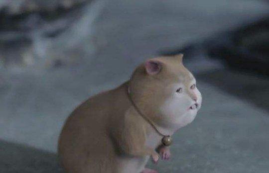 电视剧中5个的特效宠物,元宝可爱,最后一个萌化少女心!