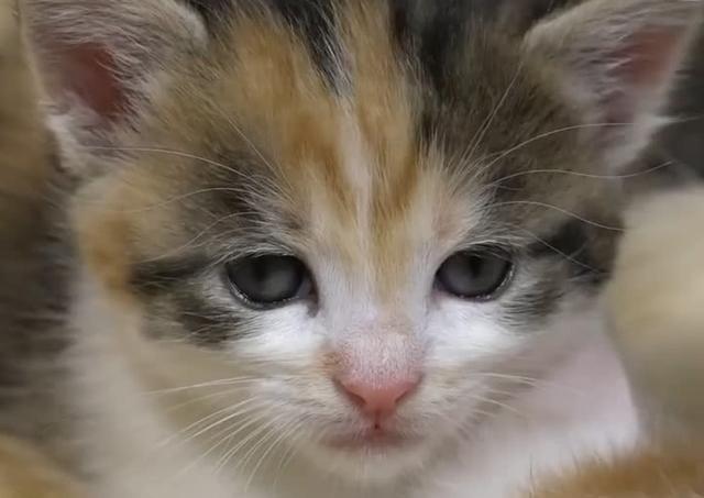 橘猫表情生了14个小猫崽喂奶时妈妈亮了:表情陈独秀优秀感觉包图片