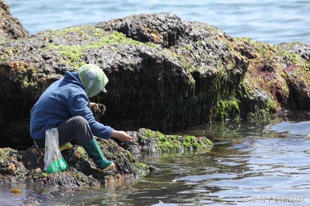 春游青岛八大关,退大潮时来赶海抓螃蟹,好多海鲜啊