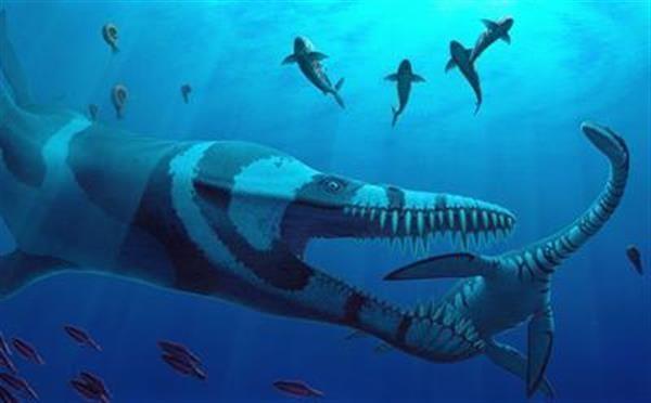 壁纸 动物 海底 海底世界 海洋馆 水族馆 鱼 鱼类 600_372