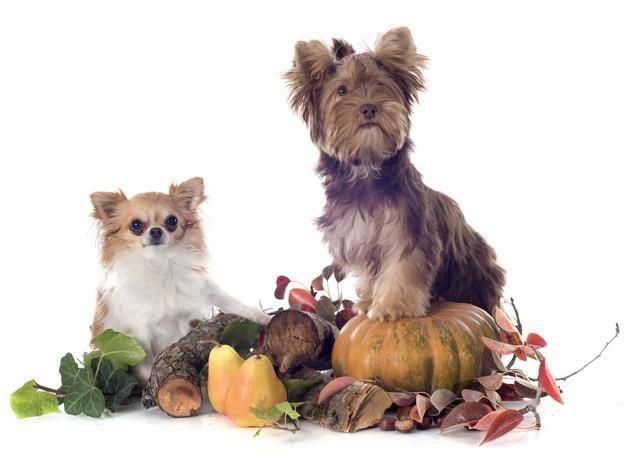 狗狗吃水果好处多多?但主人要留心,千万不要给它喂葡萄