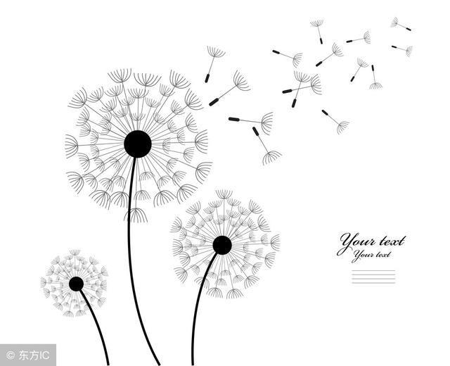 背景 壁纸 简笔画 矢量 手绘 线稿 植物 种子 640_520