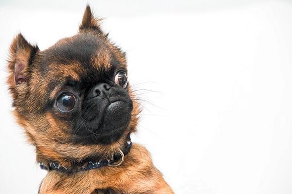 狗狗也想叫你别抽烟!抽烟的人养狗,简直就是在谋杀它,最好戒了