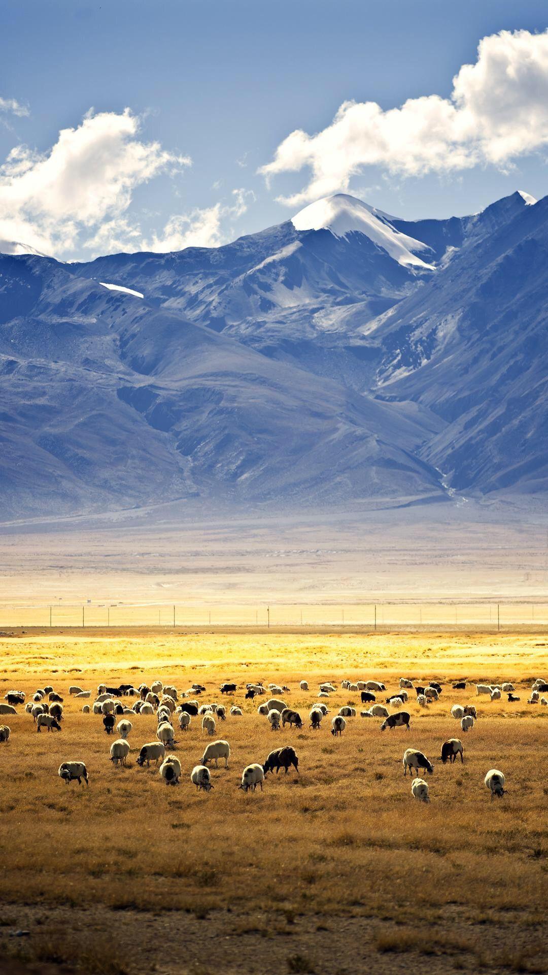 西藏风景手机壁纸,风光如仙境,草地牛羊群,天地我心空灵境!