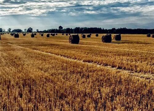 聚焦2019年中央一号文件:农村、农业会发生哪