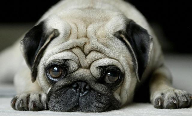 <b>想让狗狗与你一起跑步?先了解好这2点,别让你的狗狗难受</b>