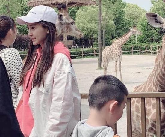 杨颖和黄晓明带小海绵,现身动物园,被认出后大方与粉丝合照