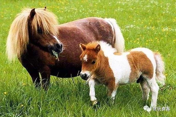 小假特辑|京郊10个值得体验的亲子农庄,让孩子与小动物亲密接触!