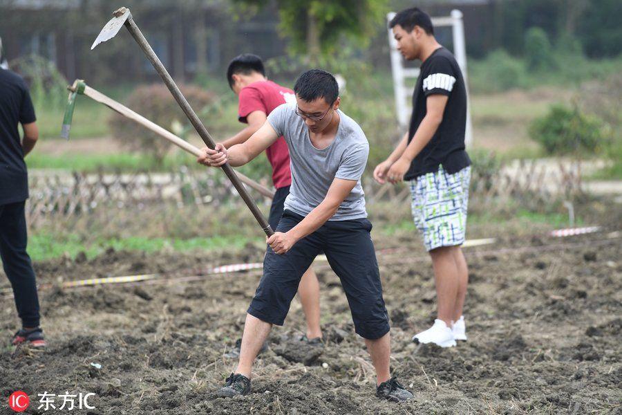 大学生扛锄头下地干农活 干完才能毕业