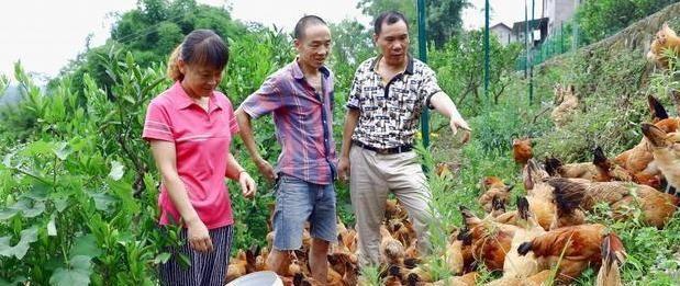 """农村养殖,怎么""""让土鸡多生蛋""""?养殖户:教你几个土方法"""