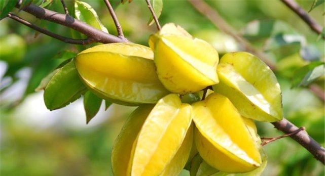 八月份有哪些应季水果?葡萄肉质细脆、龙眼特别甜!